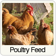poultry-feed.png