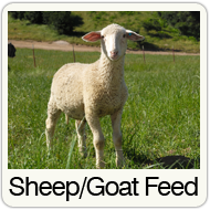 sheep-feed.png