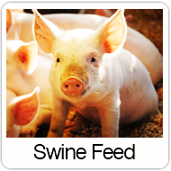 swine-feed-over.png